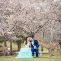 Tony & Carol (京都奈良 婚紗攝影 April 2017)