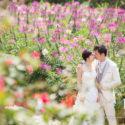 Hangi & Edward (婚紗城 婚紗攝影 April 2017)